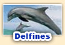 Juegos de delfines