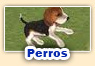 Juegos de perros